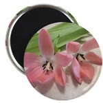 Pink Tulips In Bloom Magnet