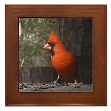 Red Cardinal Framed Tile