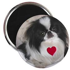 Precious Japanese Chin Valentine Magnet