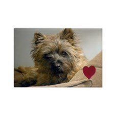Cairn Terrier Beau Valentine Rectangle Magnet
