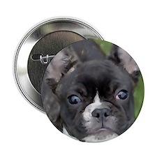 "Funny Brindle french bulldog 2.25"" Button"
