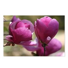 Magnolias Photography Postcards (Package of 8)