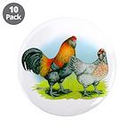 Ameraucana Chickens 3.5