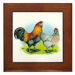 Ameraucana Chickens Framed Tile