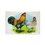 Ameraucana Chickens Rectangle Magnet (100 pack)