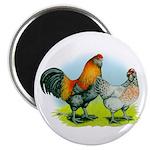 Ameraucana Chickens 2.25