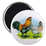 Ameraucana Chickens Magnet
