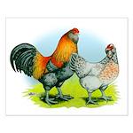 Ameraucana Chickens Small Poster