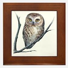 little owl Framed Tile