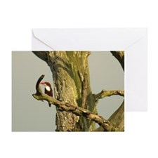 kingfisher Mulu Greeting Cards (Pk of 10)