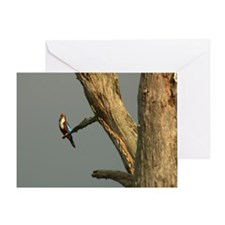 Kingfisher Mulu Greeting Card