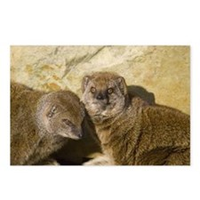 Mongoose Postcards (Package of 8)
