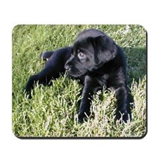 Coal Puppy Mousepad