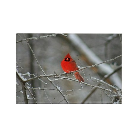 Beautiful Red Cardinal Rectangle Magnet (10 pack)