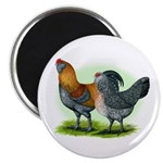 Easter Egg Chickens Magnet
