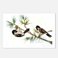 Two Chickadees Postcards (Package of 8)