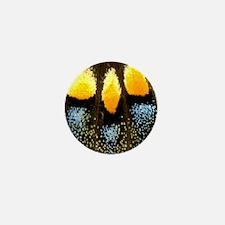 Papilio Polyxenes Butterfly Mini Button