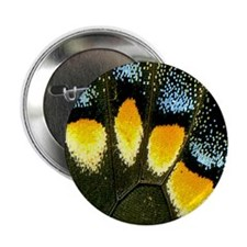 "Papilio Polyxenes Butterfly 2.25"" Button"