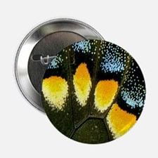 """Papilio Polyxenes Butterfly 2.25"""" Button"""