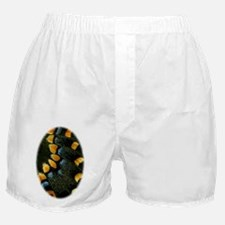 Papilio Polyxenes Butterfly Boxer Shorts