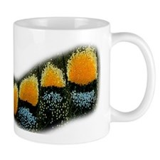 Papilio Polyxenes Butterfly Mug