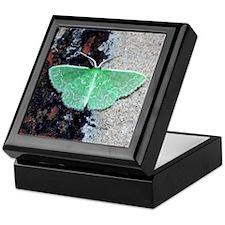 Southern Emerald Moth Keepsake Box