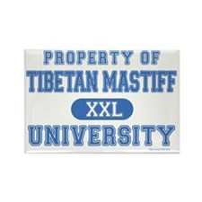 Tibetan Mastiff U. Rectangle Magnet (100 pack)