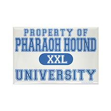 Pharaoh Hound U. Rectangle Magnet (10 pack)