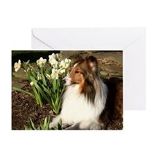 Easter Sheltie Card