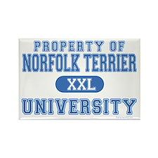 Norfolk Terrier U. Rectangle Magnet (100 pack)
