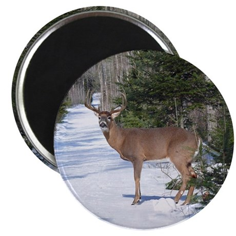 Winter Buck Magnet