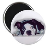 BOSTON TERRIER SWEET DOG Magnet