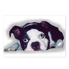 BOSTON TERRIER SWEET DOG Postcards (Package of 8)