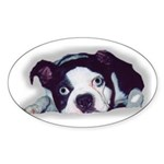 BOSTON TERRIER SWEET DOG Oval Sticker