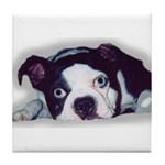 BOSTON TERRIER SWEET DOG Tile Coaster