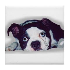 BOSTON TERRIER SWEET DOG Tile Coaster