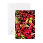 Autumn Greeting Cards (Pk of 10)