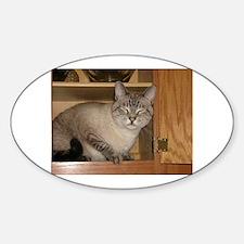 Buddha Cat Peeka-Boo! Oval Decal