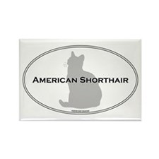 Am Shorthair Oval Rectangle Magnet