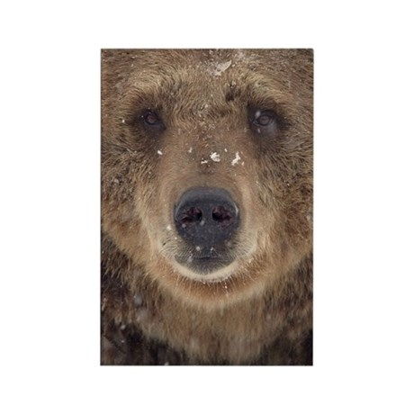 Bear Face Rectangle Magnet