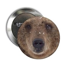 "Bear Face 2.25"" Button (10 pack)"