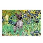 Irises-Am.Hairless T Postcards (Package of 8)