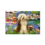 Lilies / Bearded Collie Rectangle Magnet (10 pack)