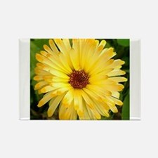 Cute Strawflower Rectangle Magnet