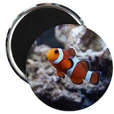 Ocellaris Clownfish Magnet