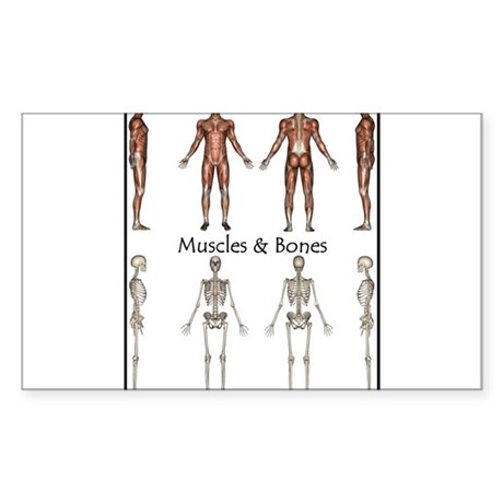 Muscles and Bones Rectangle Sticker