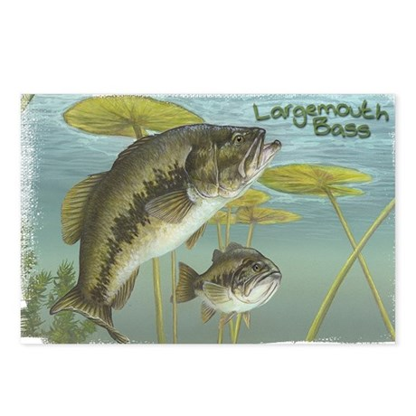 Largemouth Bass, Fish Postcards (Package of 8)