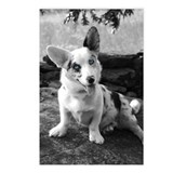 Cardigan welsh corgi Postcards