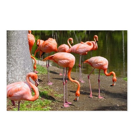 Flamingo Photo Art Postcards (Package of 8)