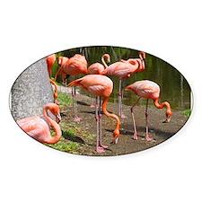 Flamingo Photo Art Oval Decal